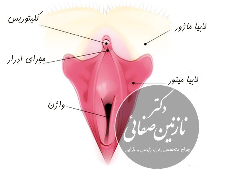 Dr-Safaei-Clitoral-Hood-Reduction-03